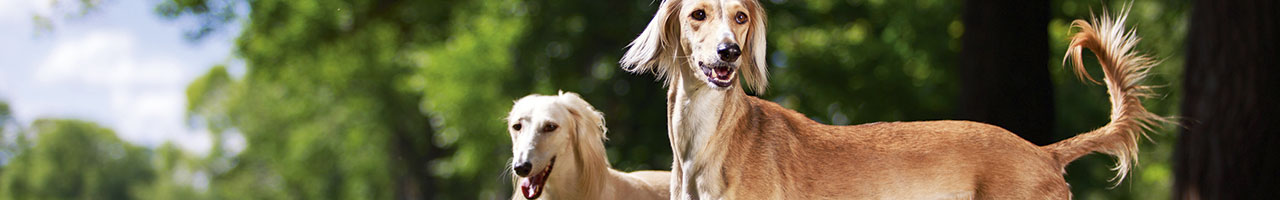 Parentage Testing for Dogs - CAG - Center for Animal Genetics