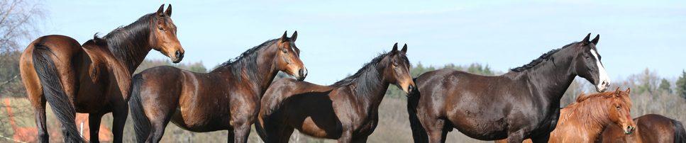 Pferde Identifikation